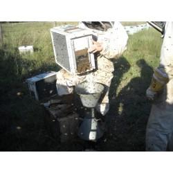 Gabbia raccogli api